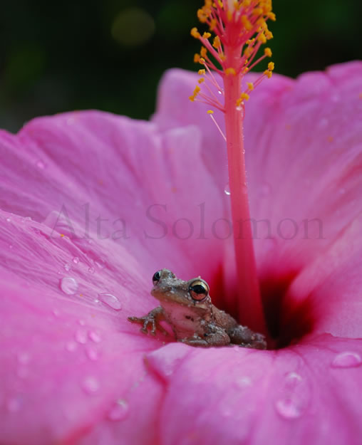 Dew Drops and Big Eyes
